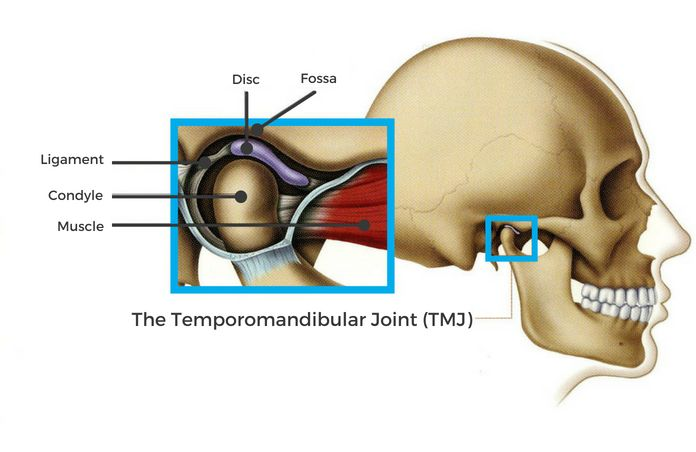 Tmj Anatomy Function Disorders Picture Sharedentalcare
