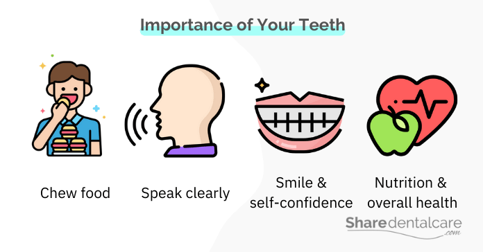 Importance of Your Teeth